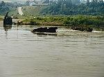1986-07-18 Schwimmen mit Luchs 39.jpg