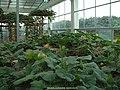 2003年西丽果场 - panoramio (1).jpg