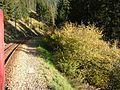 2007 10 Berninabahn 041640.jpg