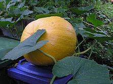 2007 september aed kõrvits prügikast.jpg