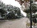2010年12月15日夜里的那场雪 - panoramio (4).jpg