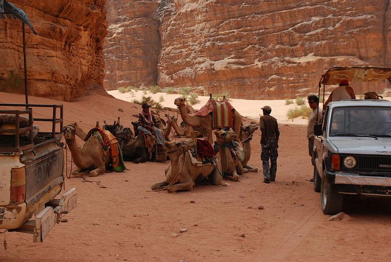 Camels in Wadi Rum. From Top 10 Things to Eat in Jordan