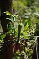 2012-10-26 13-48-39 Pentax JH (49281913903).jpg