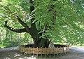 2014 Suchum, Ogród botaniczny (15).jpg
