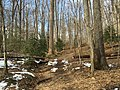 2016-02-08 13 56 02 View north along the Gerry Connolly Cross County Trail between Vale Road and Lawyers Road in Oakton, Fairfax County, Virginia.jpg