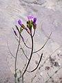 2016.04.22 11.57.11 DSC03569 - Flickr - andrey zharkikh.jpg