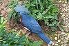 2016 Singapur, Jurong Bird Park (178).jpg