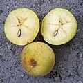 2018-09-22-Sorbus domestica (fruit)-0695.jpg