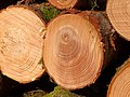 2021-02-20 10-59-58 forêt.jpg