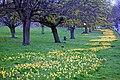 21 March Rosehill (2).jpg