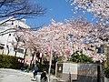 2 Chome Nakasakurazuka, Toyonaka-shi, Ōsaka-fu 561-0881, Japan - panoramio - yokoyokoi (4).jpg