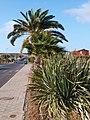 35649 Parque Holandés, Las Palmas, Spain - panoramio.jpg