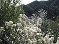 4 Peaks Flora 5.jpg