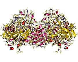 二氢乳清酸酶