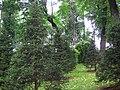 5620. St. Petersburg. Summer Garden (4).jpg