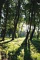 61-101-5006 Старий парк.jpg
