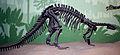 9162 - Milano, Museo storia naturale - Camptosaurus dispar - Foto Giovanni Dall'Orto 22-Apr-2007.jpg