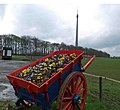 A cart of pansies outside Thorncliffe Farm Shop - geograph.org.uk - 779349.jpg