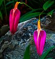 A delightful visit to the Quito Botanical gardens - (16472986099).jpg