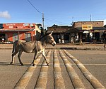 A donkey walks along one of the roads in hoima,.jpg