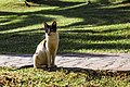 A feral cat in Tangier 2015-11-25.jpg