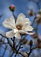 A hint of Spring (995378249).jpg