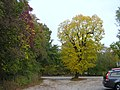A passeggio nel Bosco...le mie scarpinate - panoramio (6).jpg