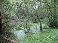 A pond in Coed Plas Llandegfan woodland - geograph.org.uk - 952976.jpg