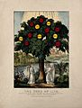 A tree bearing apples labelled with virtues; representing th Wellcome V0007656.jpg