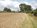 Abbey Park Farm across a cornfield, by Littleworth Common - geograph.org.uk - 34467.jpg