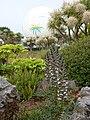 Acanthus spinosus Ornamental Gardens near Torre Abbey, Torquay - geograph.org.uk - 1950415.jpg