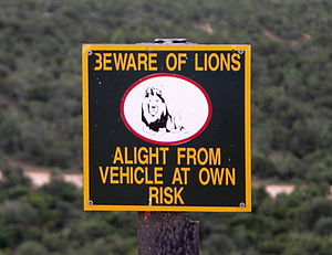 Man-eater - Signage in Addo Elephant National Park reminding humans as to their status of prey to the African lion.