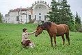 Affectionate horse.jpg