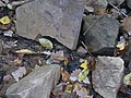 Aitzenbach Dunkelfärbung Steine durch Mineralien.jpg
