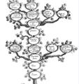 Albero Genealogico Pizolanti.png