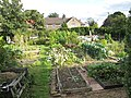 Allotments, The Crescent, East Acton - geograph.org.uk - 2075051.jpg