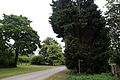 Along Mashbury Hall Lane from the north, Mashbury, Essex, England.JPG