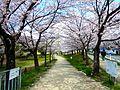 Amaike park.JPG