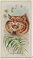 American Wild Cat, from the Wild Animals of the World series (N25) for Allen & Ginter Cigarettes MET DP836475.jpg