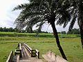 Amjhupi-Nilkuthi-147621602085350 FACEBOOK FAN PAGE ID.jpg