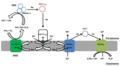 Ammonia oxidation-es.tif