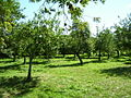 An Orchard - geograph.org.uk - 226238.jpg