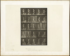 Animal locomotion. Plate 528 (Boston Public Library).jpg
