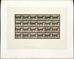Animal locomotion. Plate 607 (Boston Public Library).jpg
