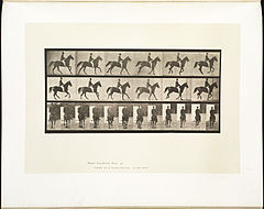 Animal locomotion. Plate 619 (Boston Public Library).jpg