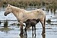 Animales-aiguamolls l'emporda-2013 (8).JPG