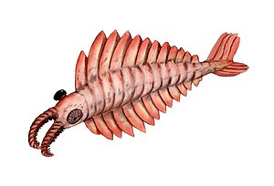 Cambrian - Image: Anomalocaris BW