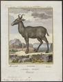 Antilope bubalis - 1700-1880 - Print - Iconographia Zoologica - Special Collections University of Amsterdam - UBA01 IZ21400119.tif