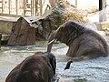 Antwerp Zoo (12210681935).jpg