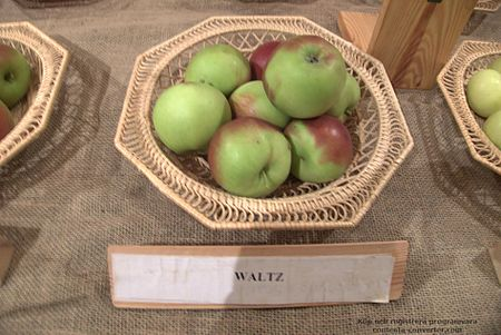 Apples (Waltz cultivar).jpg